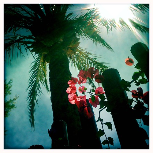Palm and flower