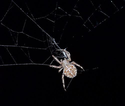 Spider by WETCLOUD