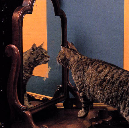 Pepper gazing into the mirror before a self-portrait