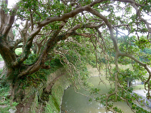 Large overhanging trees