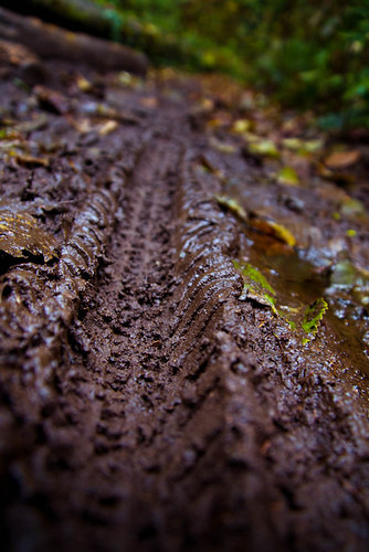 Mud Track by Terry Schmidbauer