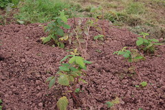 2011 10 16_allotment_0005