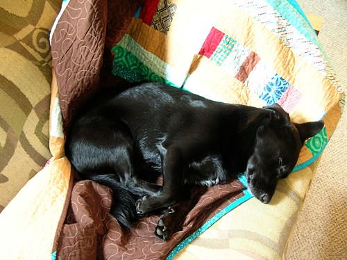 Simon sleeping on the quilt