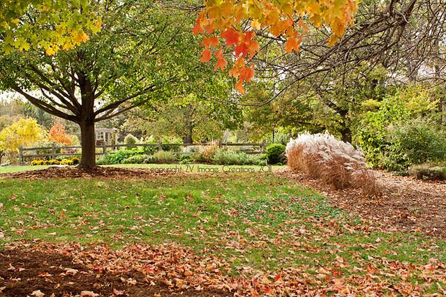Serene autumn landscape