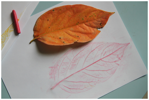 Leaf rubbings