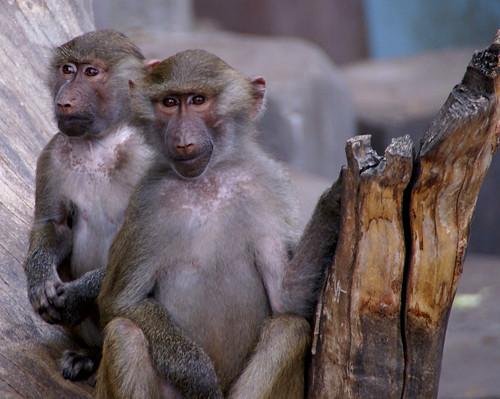 Monkeys by little_frank