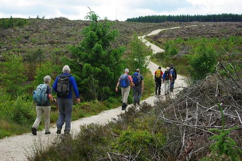 200110619-07_Winding Path - Pendinas Forest - Esclusham Mountain by gary.hadden