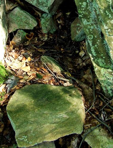 tussock moth cocoon rock
