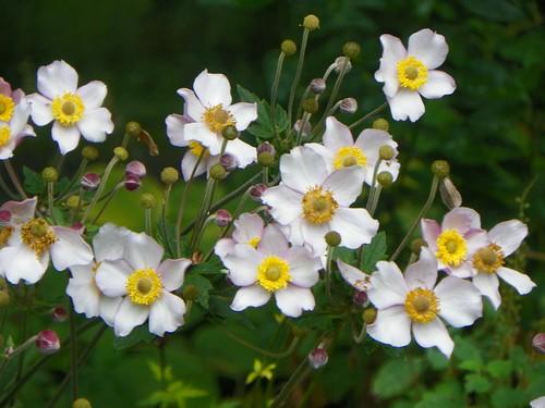 bloom8