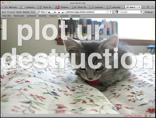 REAL-TIME KITTENS!!!!