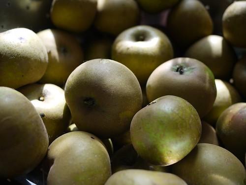Golden Russet apples