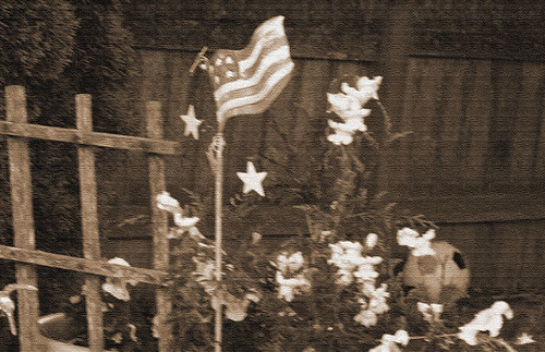 Day 223 :: 365 … Flag and Flowers by Echo9er