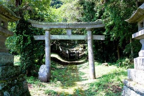 The Giant Trees of Tochigi: #79 The Giant Cryptomeria of Yuzen Shrine