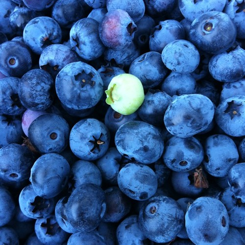 Blueberry goodness