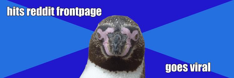 socially awkward penguin IRL