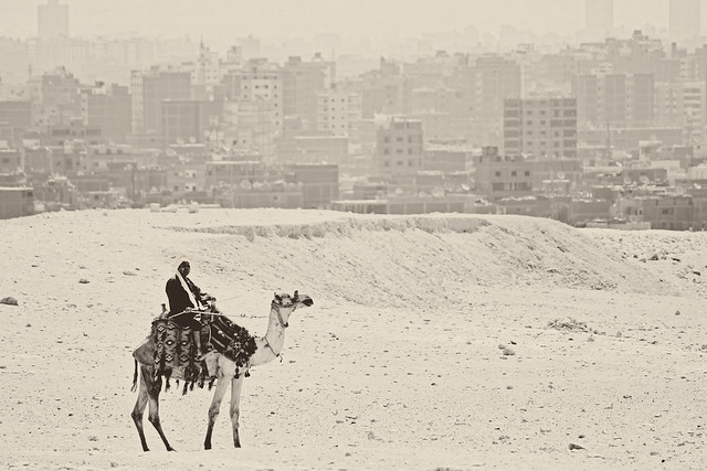 camel and city