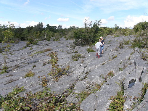 Exploring the limestone pavements, Gait Barrows