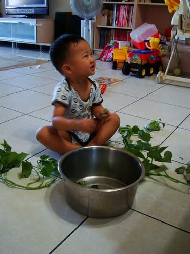 小幫手來幫忙撕地瓜葉