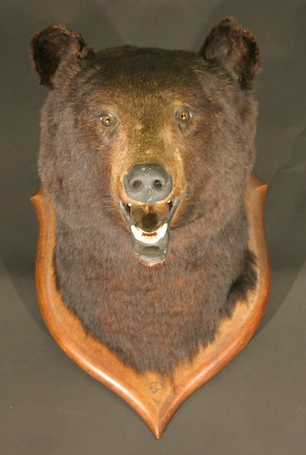This stuffed and mounted black bear head made £780