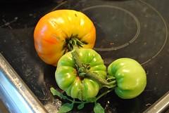 ripe-ish tomatoes