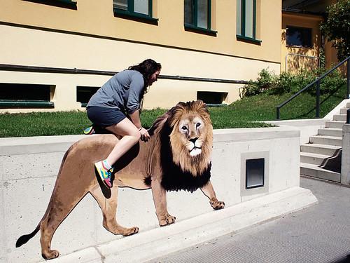 eschuh_zoo_lion