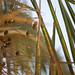 Heat, sun & palms