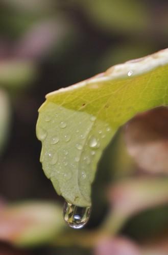 08.13.2011 Rain… Finally!