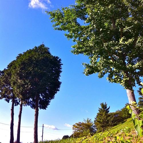 夏の日差し  ι(´Д`υ)アツィーかったね! #夏photo2011