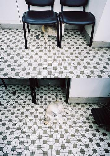 眼鏡店的貓