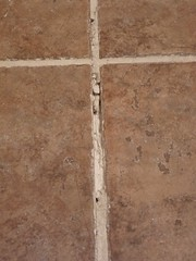 re-grout bathroom tiles - pix 01