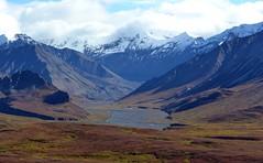 Mountains - Autumn in Denali