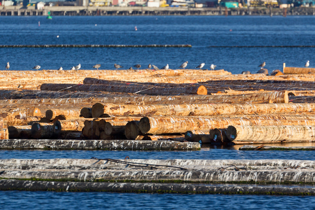 Port Angeles harbor logs