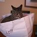Jackson in the Bag, September 01, 2011