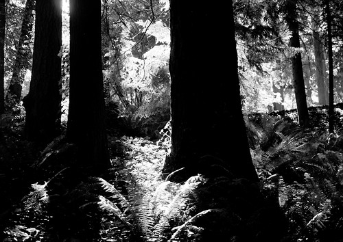 Deep Light in Forest