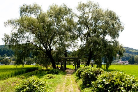 The Giant Trees of Tochigi: α8 Saigyo's Wandering Willow