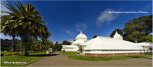 San Francisco Conservatory of Flowers by davidyuweb
