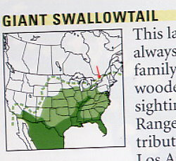 Giant Swallowtail range from Kaufman Field Guide to Butterflies (highly recommended!)