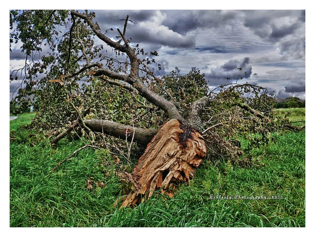 #240/365 Storm Loss