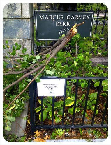Marcus Garvey Park after Hurricane Irene