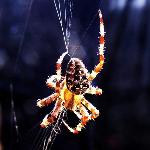 Spider  by deadheaduk