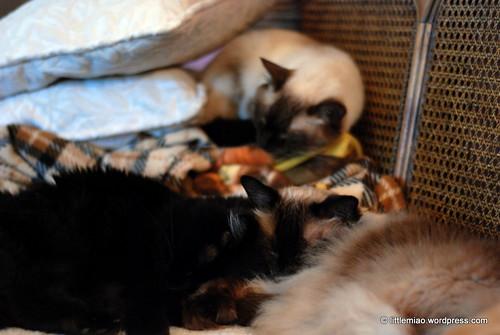 miao 8-28-2011 10-47-27 AM