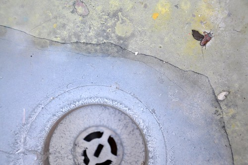 drain, bug