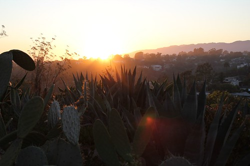 santa monica stairs at sunset - cacti