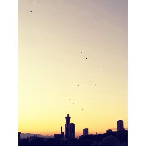 翼を広げて   #sunset #iphonography #instagram