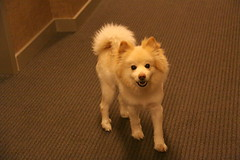 Cute Dog in the Gehry Building Hallway - NYC