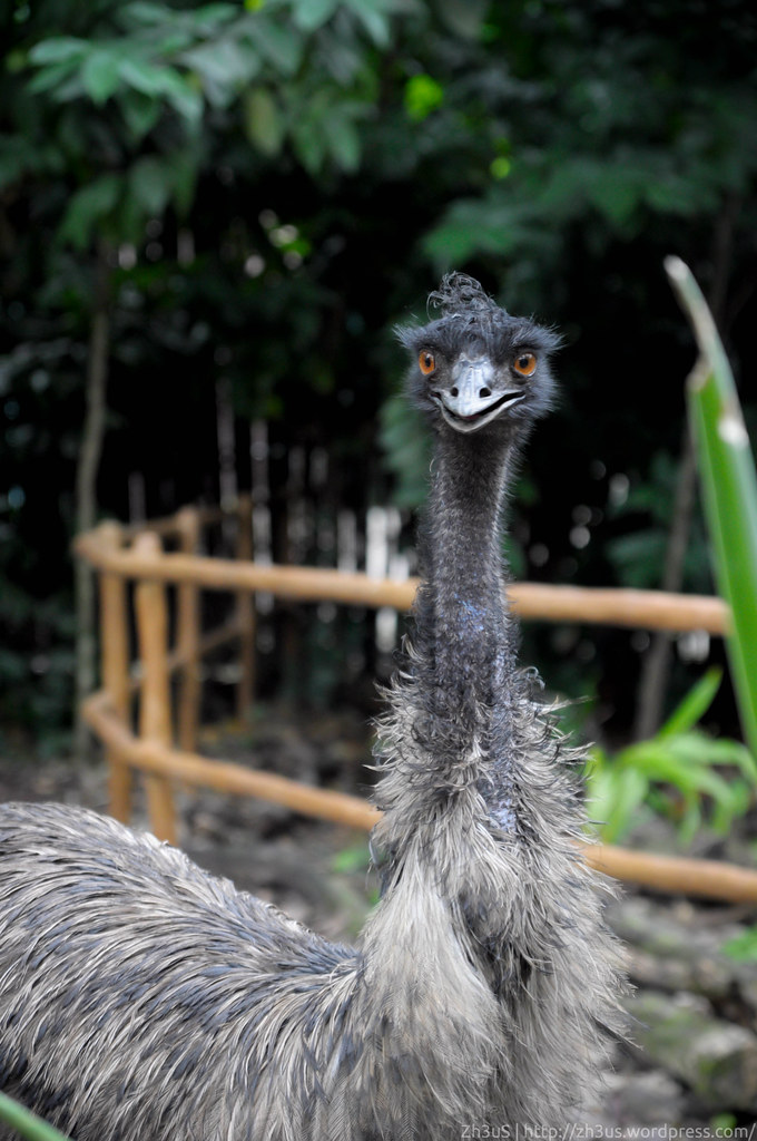 Jurong Birdpark (67 of 89)