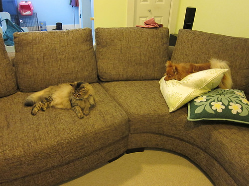 Pets on the Couch