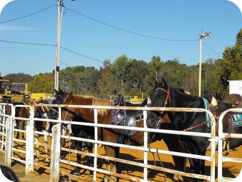 Horses 12 framed