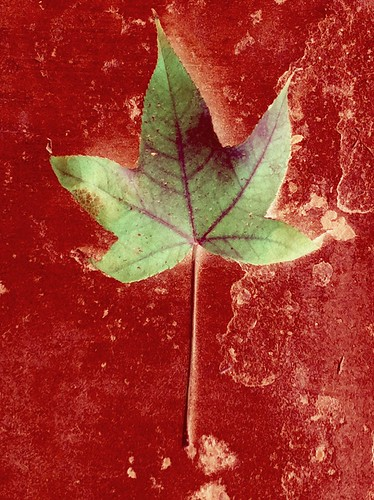 MARS Leaf