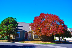 The Changing Season - Township at Highlands